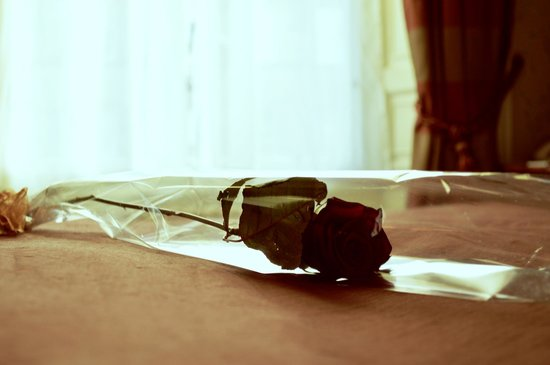 The Howard: A single red rose left on our bed