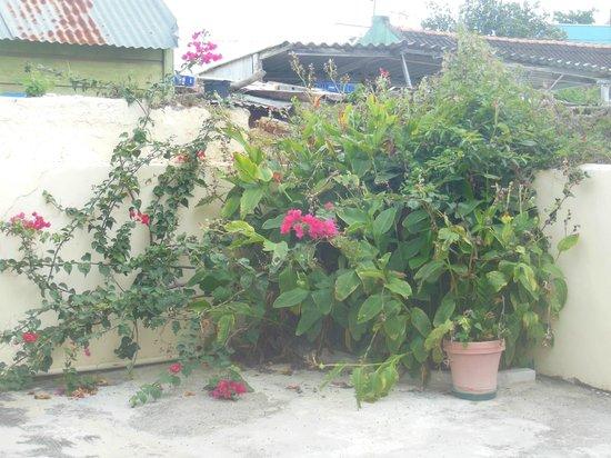 Poppy Hostel Curacao: Garten/Hof