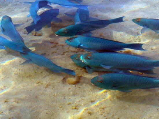 Makayla Palms: Parrot fish on the shore