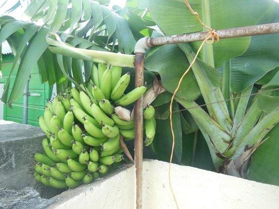 Poppy Hostel Curacao: Garten