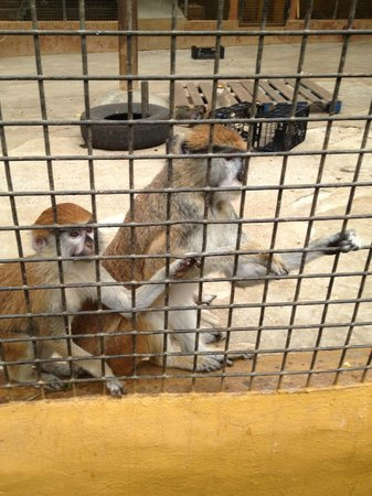 Monkey Park : .