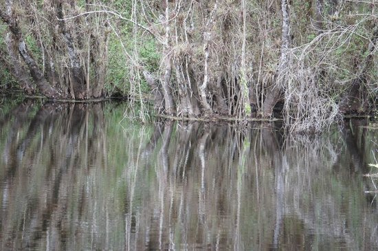 Six Mile Cypress Slough Preserve: reflection in lake