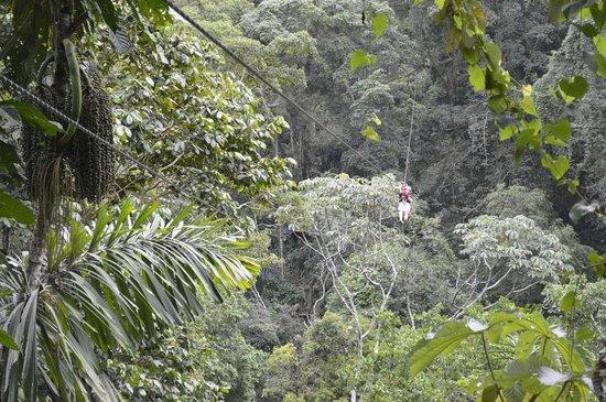 Terraventuras Jungle Expeditions: Tarzan'mania !