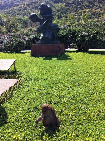 Resort Intime Sanya: остров обезьян