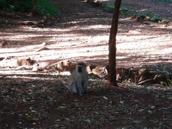 Nairobi Arboretum: Singe 3