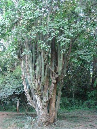 Nairobi Arboretum: Arboretum 11
