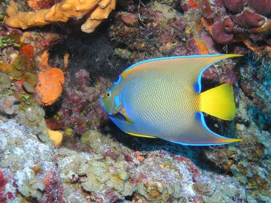 VIP Diving: Gorgeous Sealife in Bonaire!
