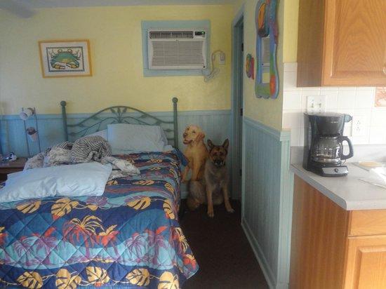 Faraway Inn : roxie and friend