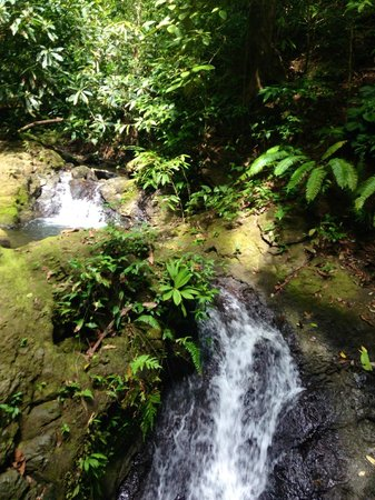 Bosque del Cabo Rainforest Lodge : WATERFALL ON THE CREEK TRAIL