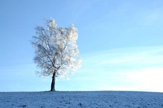 L'Auberge du Brabant : la bresse