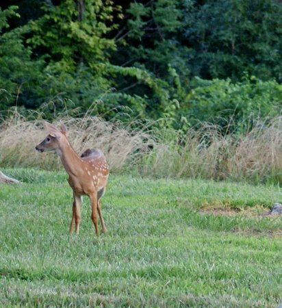 Shoals, IN: View Deer from Cabins