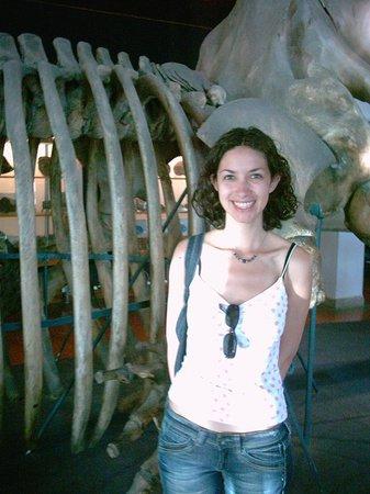 Aquarium Donostia-San Sebastian: Esqueleto de ballena del Aquarium de Donosti