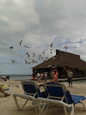 Las Perlas Condos: Vista de la playa y del restaurante