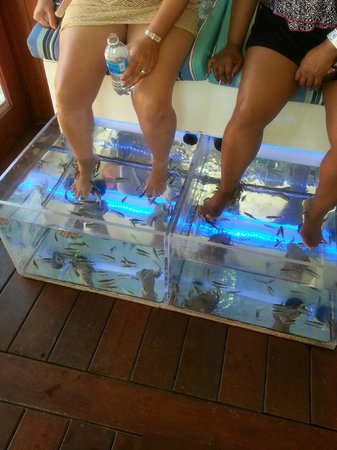 fish pedicure picture of mr sanchos beach club cozumel