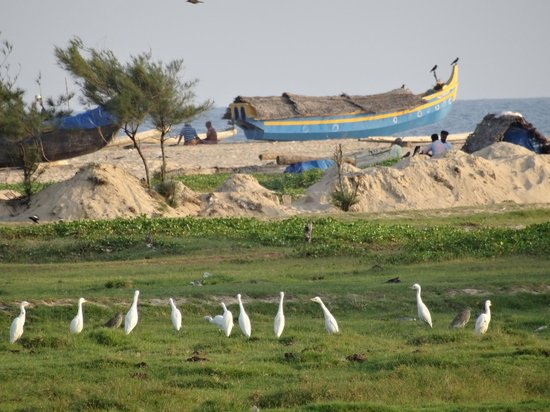 The Travancore Heritage Beach Resort: Fishing boat and egrets