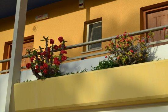 Sitia Bay Hotel: mooie bloemen