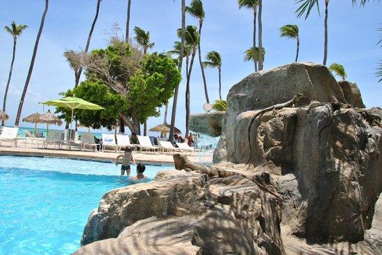 Holiday Inn Resort Aruba - Beach Resort & Casino: Abundan las iguanas, totalmente inofensivas