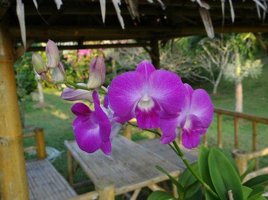 Chez Charly Bungalow: Un jardin fleuri