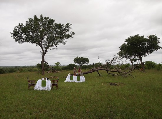 Sabi Sabi Little Bush Camp: Private breakfast in the bush