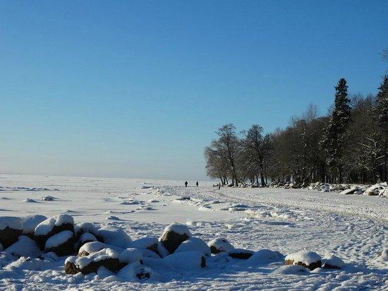 Repinskaya: Зимой