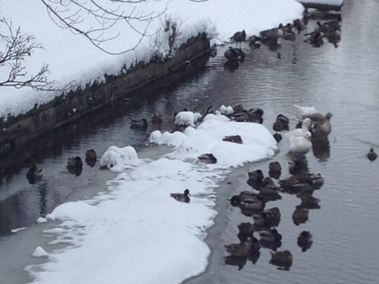 Forest Lawn: Ducks in snow on the creek