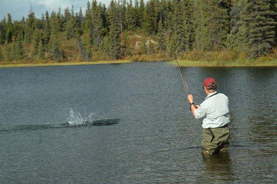 Inconnu Lodge : Fighting large Lake Trout