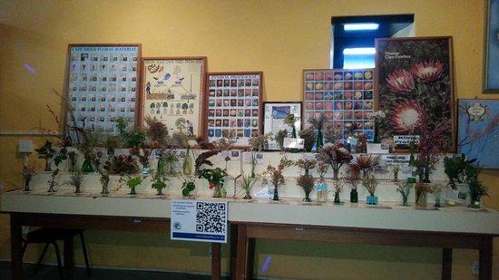 Bartolomeu Dias Museum Complex: Flaura Display