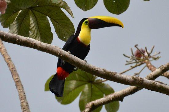 Phidjie Lodge : Un toucan à Phidjie Lodje