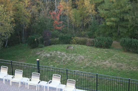 Atlantic Eyrie Lodge : Local wildlife on hotel grounds