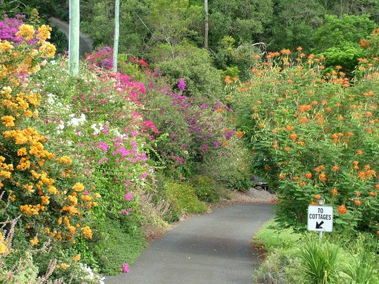 Cooroy Country Cottages: Private roadway to cottages