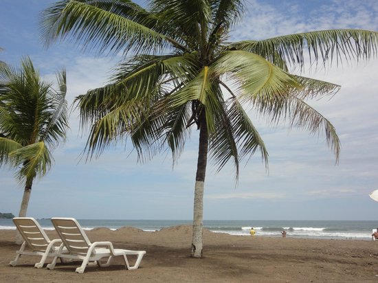 Jaco Beach : Cocos en la playa, uno de los pocos sitios para tomar sombra