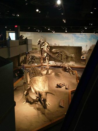 Royal Tyrrell Museum of Palaeontology : Great Displays