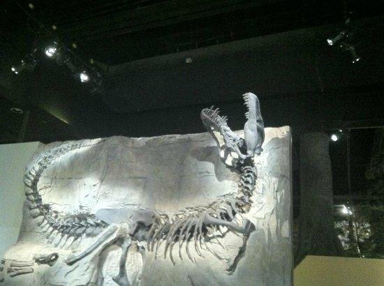 Royal Tyrrell Museum of Palaeontology : Black Beauty