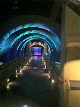 Royal Tyrrell Museum of Palaeontology : Cool Tunnel