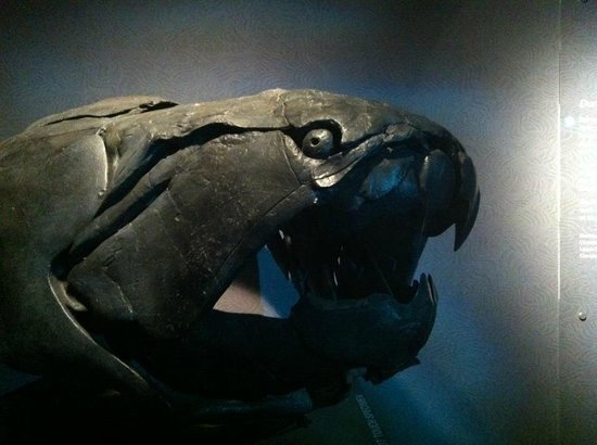 Royal Tyrrell Museum of Palaeontology : Giant Fish