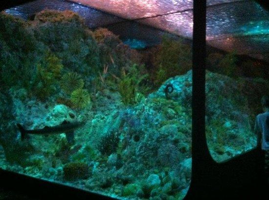 Royal Tyrrell Museum of Palaeontology : Aquarium Room