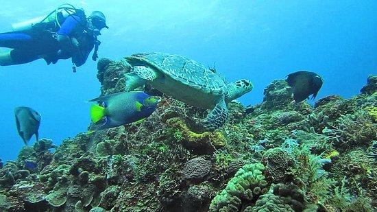 Occidental Cozumel: Hawksbill turtle