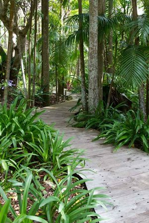 Montville Grove: Rainforest landscapiung