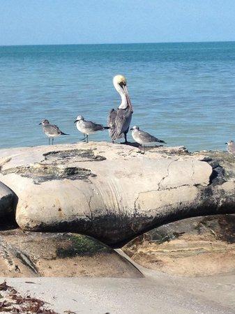 Villas HM Paraiso del Mar: Le creature dell'isola