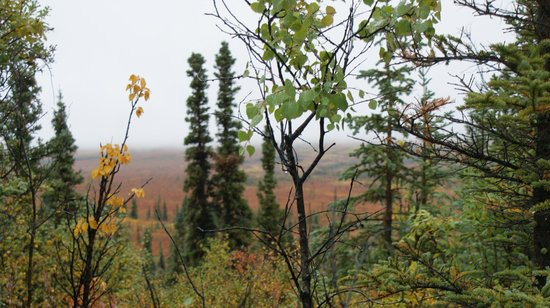 Best of Alaska Denali Jeep Backcountry Safari: Beautiful scenery even though it was raining