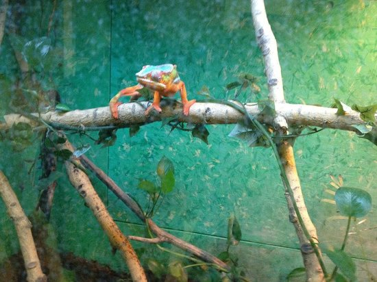 Reptile World: Coolest Chameleon Ever