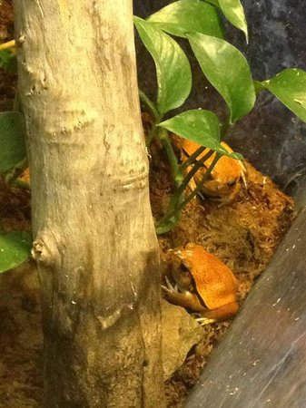 Reptile World : Frogs