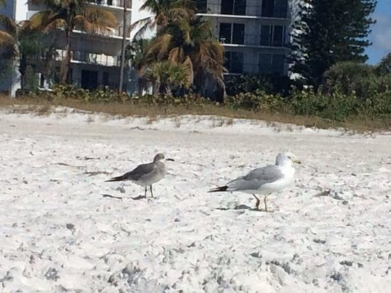 Lido Beach: friendly birds