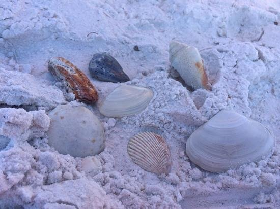 Lido Beach: great shells!