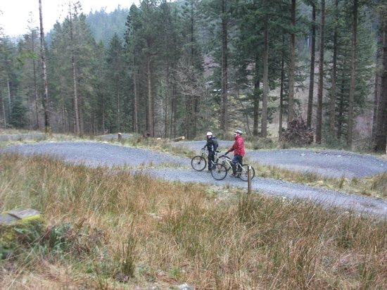 Coed Cae Bed & Breakfast: mountain biking at coed y brenin