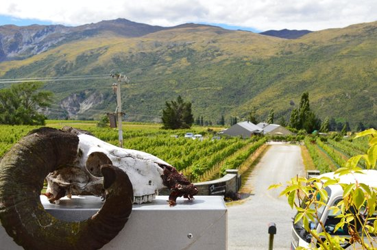 Queenstown Wine Trail: Mt Rosa Winery, Otago