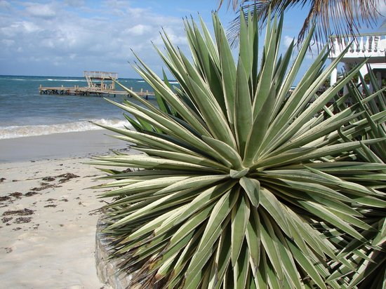 Henry Morgan Beach Resort : Gros Aloes