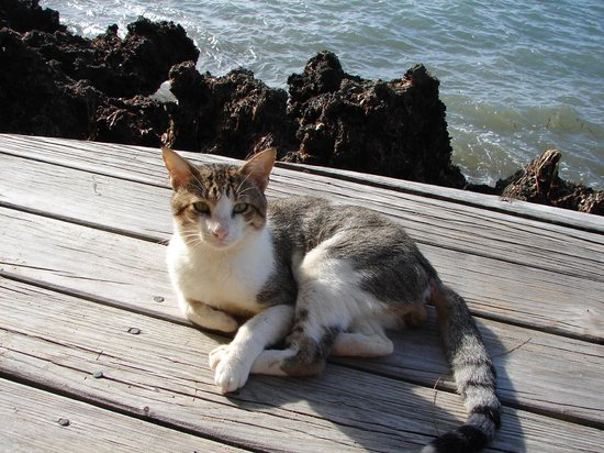 Henry Morgan Beach Resort : Il y a des chats partout