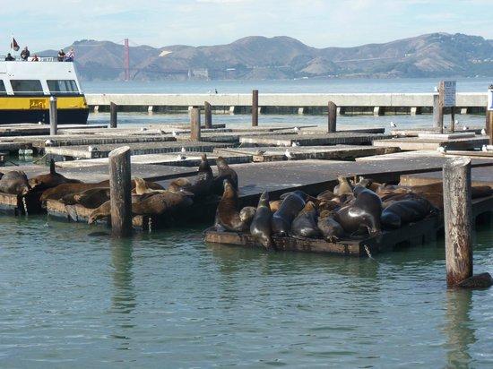 San Francisco Bay: Pier 39 , CA., San Francisco USA.