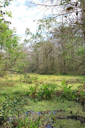 Corkscrew Swamp Sanctuary: walk2
